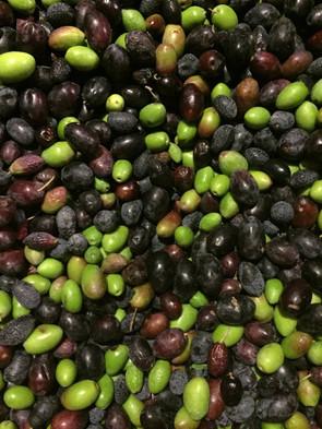 olives .JPG