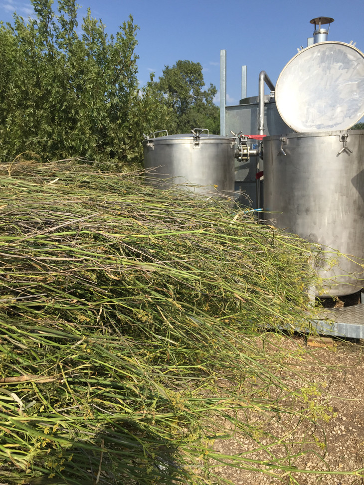 distillation du fenouil.JPG
