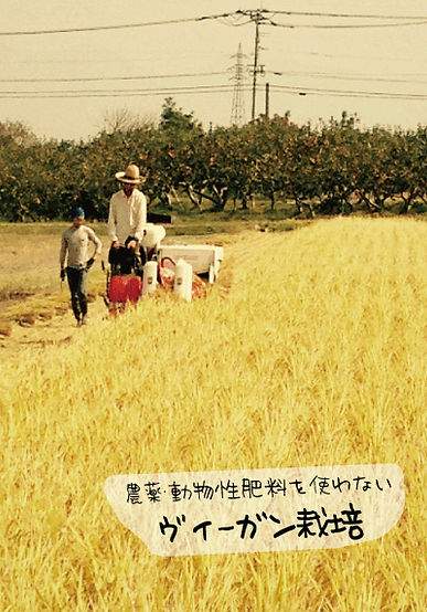 稲刈り画像.jpg
