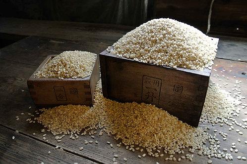 自然栽培 ひのひかり 【玄米】 5kg