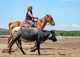 Sheryl Cow.jpg