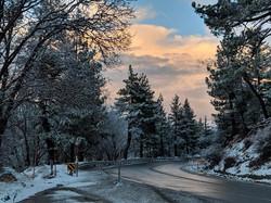 Angelus Oaks in Winter