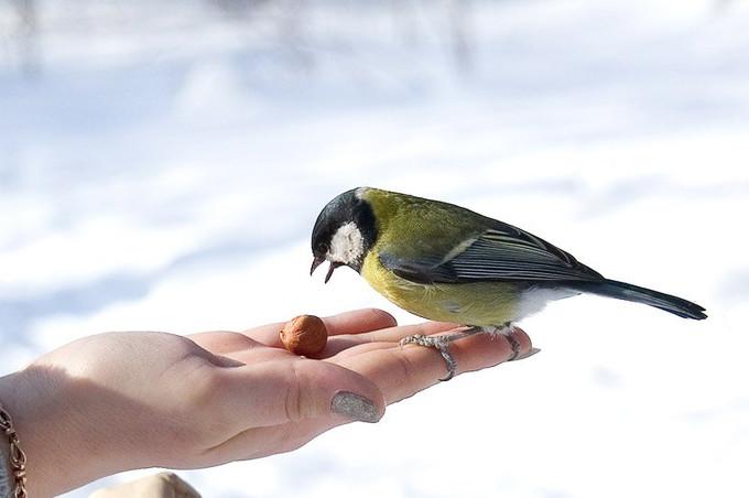 Какого числа День птиц в 2017 году?