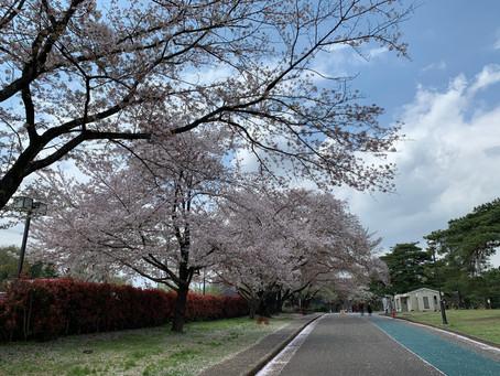 Sayama Inariyama park