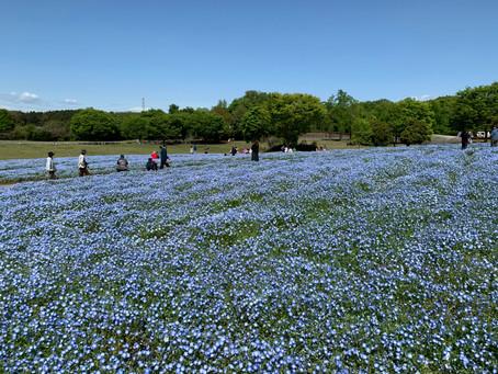 Musashi-Kyuryo national government park
