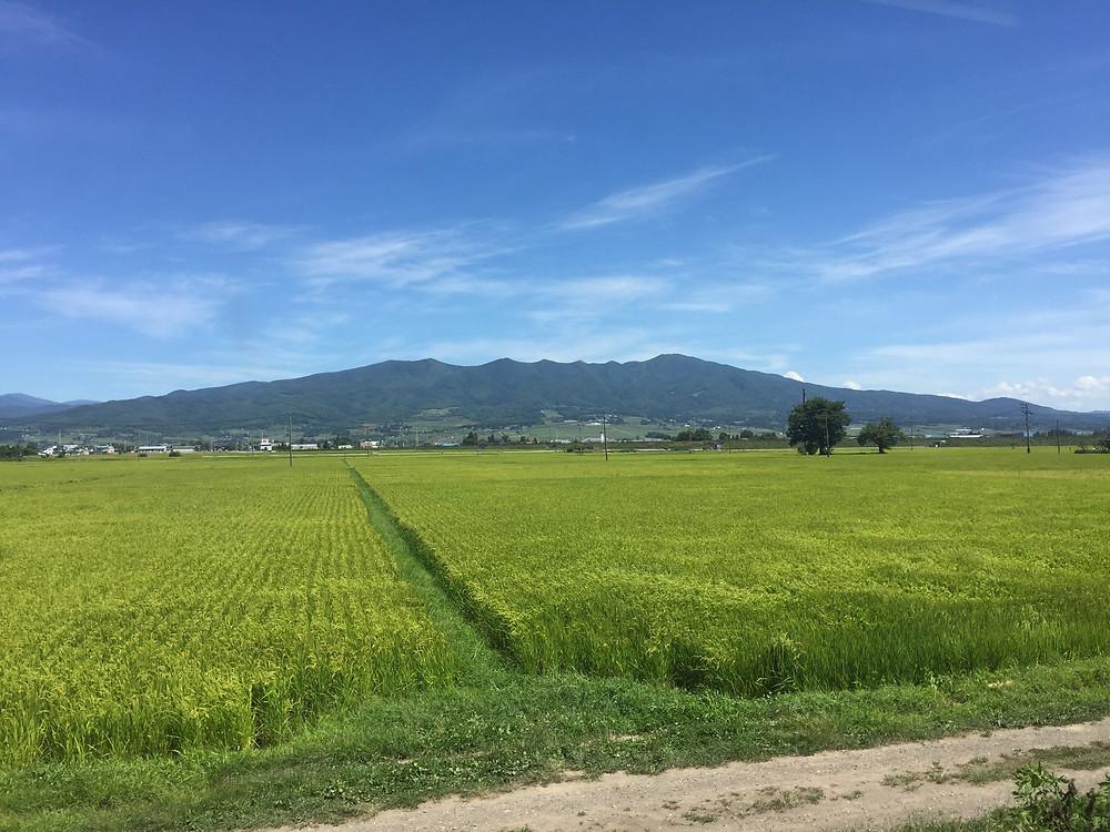 Rice field in Fukushima prefecture