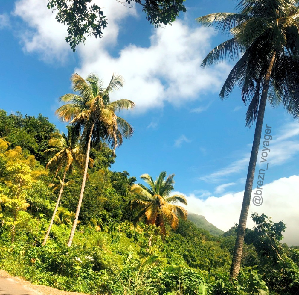 Grüne Insel Dominica.