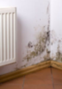Mold in Home.jpg