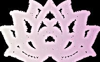 SER_LOTUS_Pink Grad.png