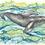 "Thumbnail: Original and Prints - ""Baleen and calf"" - Humpback Whale"