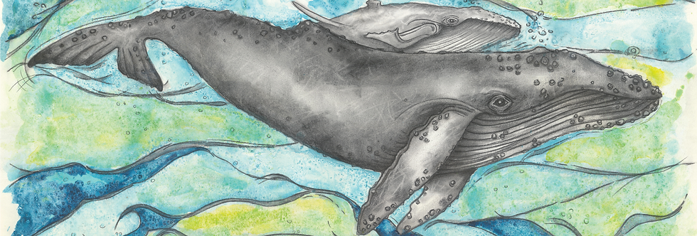 "Original and Prints - ""Baleen and calf"" - Humpback Whale"