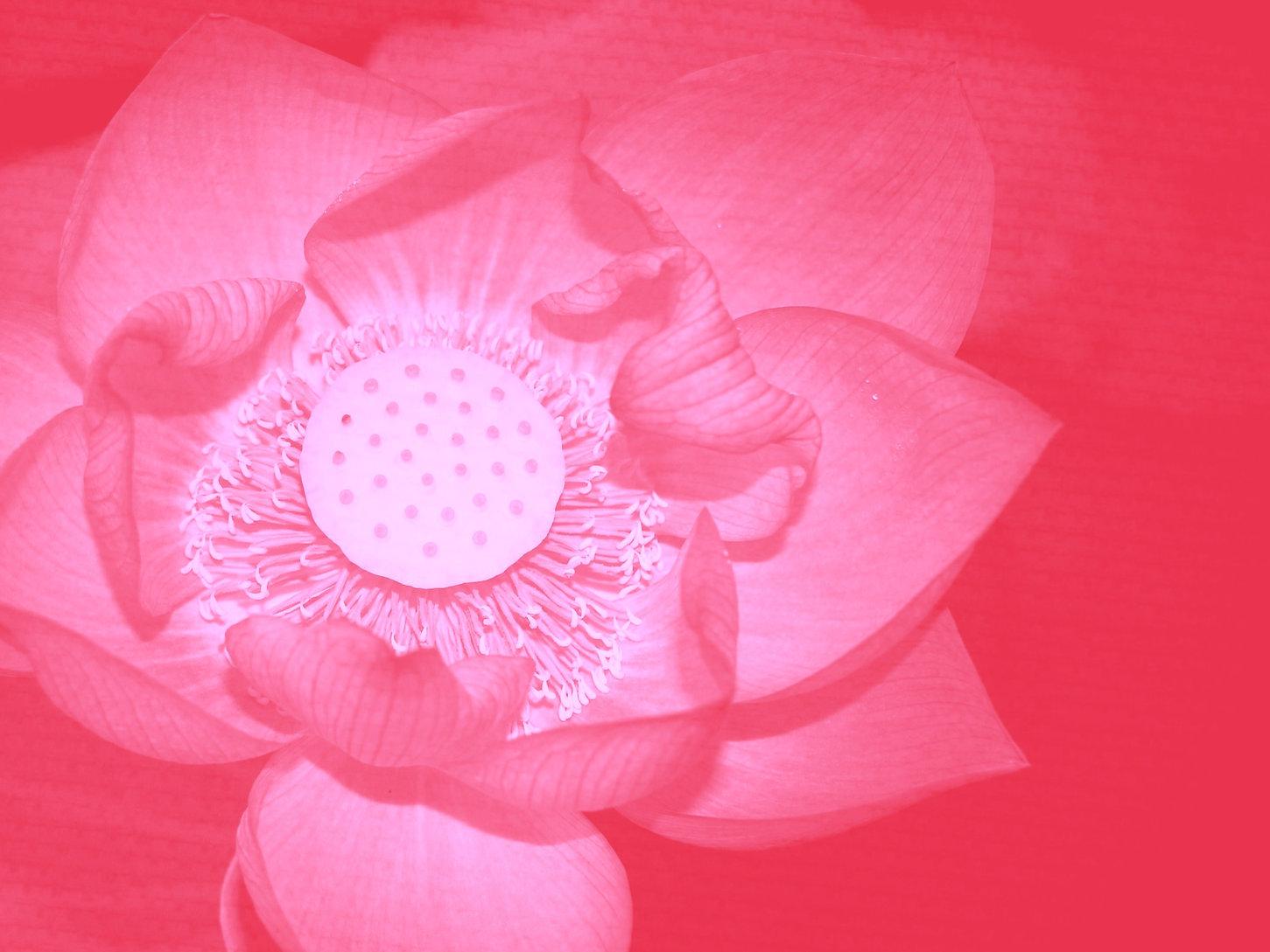lotus%252525252520(2)_edited_edited_edit