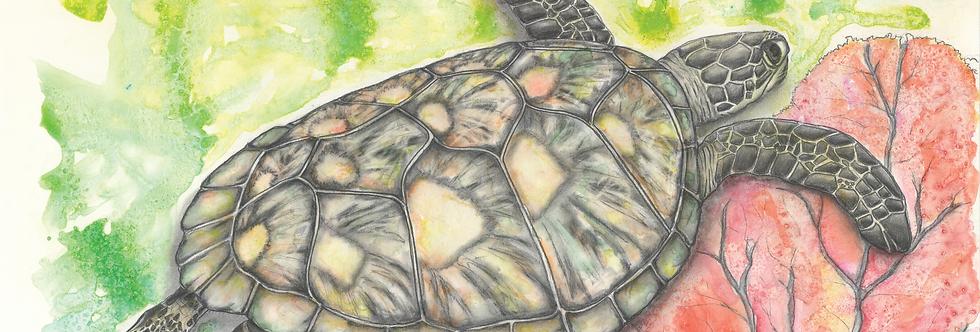 "Original and Prints - ""Chelonia"" - Green Turtle"