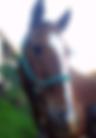 Horse Simply Horse Sense Cherie Cassara LMFT 90709