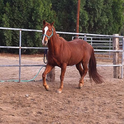 Cherie M. Cassara LMFT Equine Assisted or Office Based Counseling Orange County CA Horse Assisted