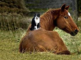 Horses Simply Horse Sense Cherie Cassara LMFT 90709