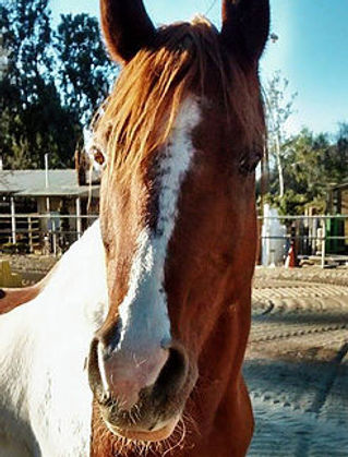 Journey part of the oc equine assisted emdr herd