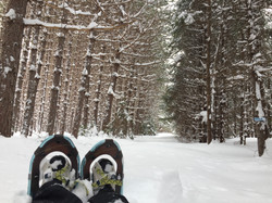 Great Snowshoeing