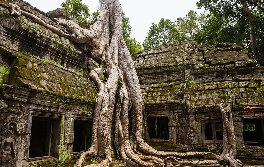 image of huge tree roots growing over ancient stone temple in Cambodia