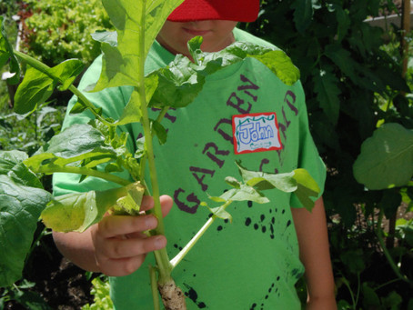 A Summer of Garden Camps is now behind us . . . and what fun it was!