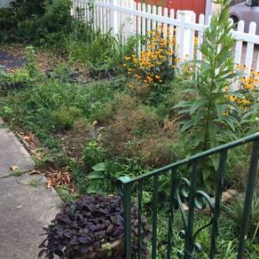 Weeds Galore!