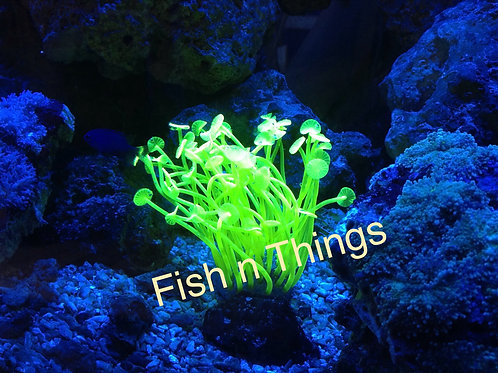 AZOO Neon Coral Yellow - S