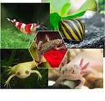 amphibian tile1.jpg