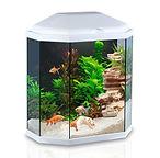 Ciano Aqua 30 Aquarium With L.E.D Light