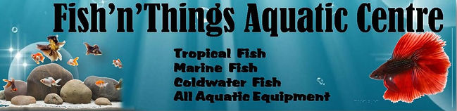 Fish n Things Aquatic Centre Neath Swansea Port Talbot Skewen