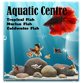 Fish N Things Tropical Goldwater Marine supply store Swansea Neath