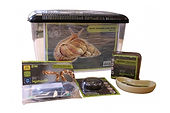 Reptile start up kits basic home beginners
