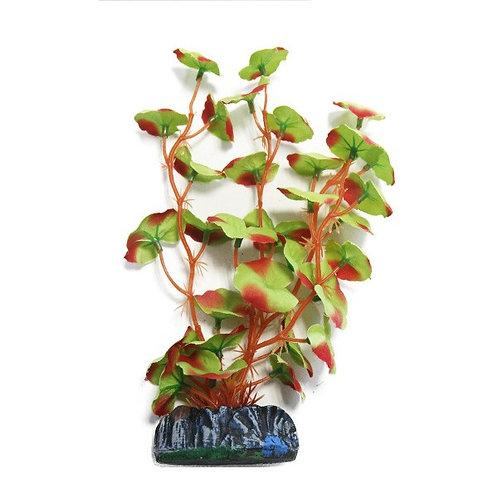 Betta Choice 20cm Silk Red-Edged Hydrocotle