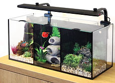 AquaOne Betta Trio 35L Aquarium