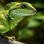 chinese-water-dragon_edited.jpg