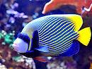 MARINE LIVE FISH