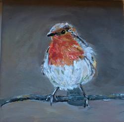 Robin het roodborstje