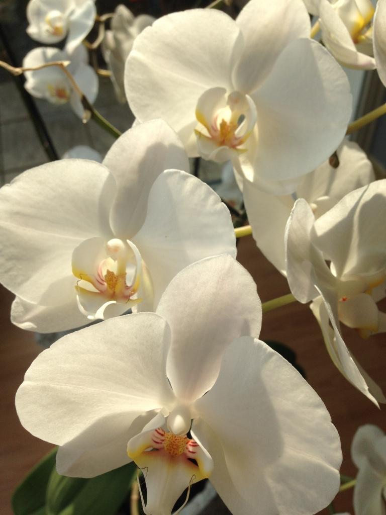 De Bloem Van Een Orchidee Wat Een Schoonheid Creatief Zeeland