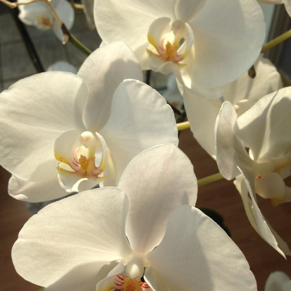De bloem van een orchidee, wat een schoonheid
