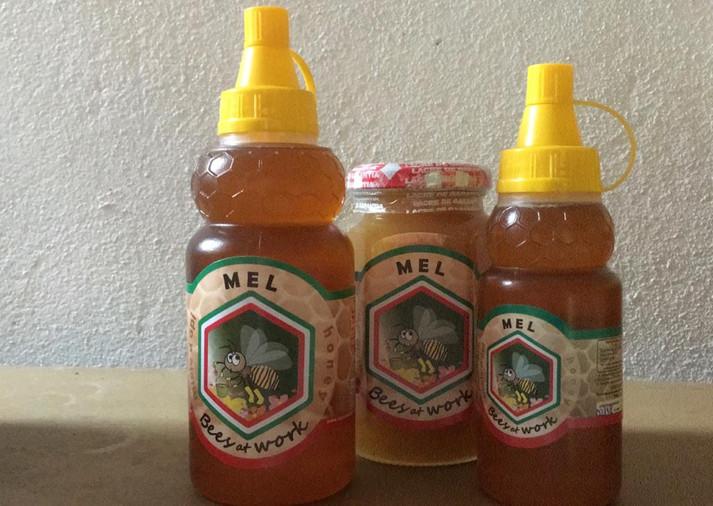 Casal recupera Mata Atlântica em  Triunfo e produz 1 tonelada de mel por ano
