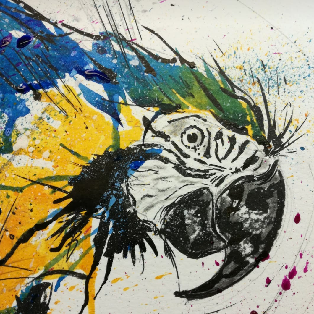 Splash Macaw