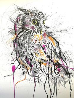 Splash Tropical Screech Owl