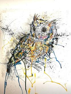 Splash Indian Scops Owl