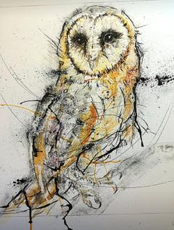 Splash Barn Owl