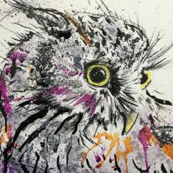 Splash Screech Owl