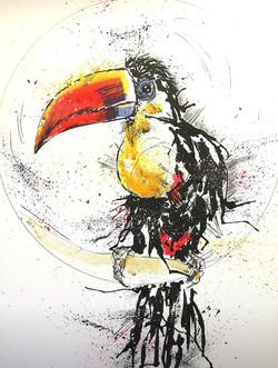 Splash Toucan