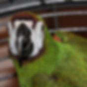 Severe Macaw 19_edited.jpg