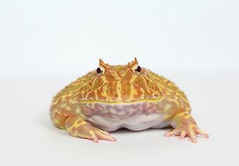 edited toad.jpg