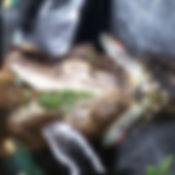 Alligator 11 _edited.jpg