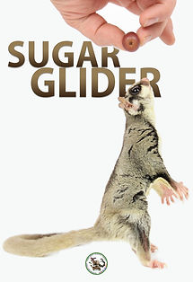 sugargliderposter.jpg