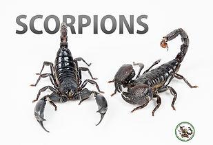 scorpionposter.jpg